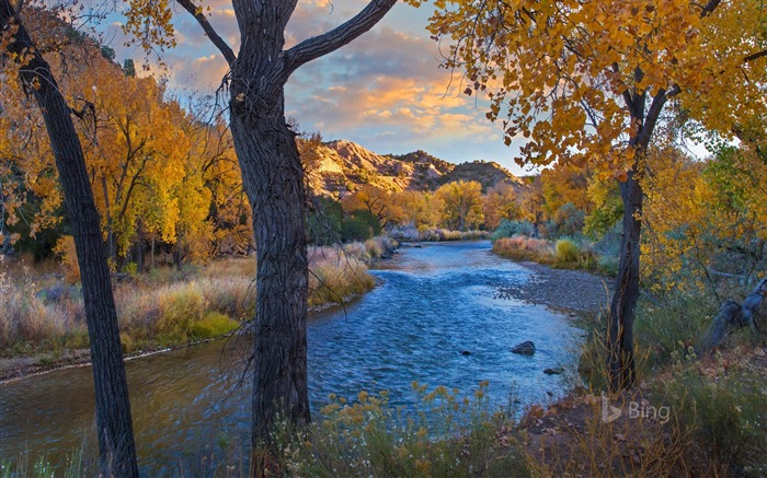 New Mexico Cottonwood trees in autumn 2017 Bing Wallpaper Views:679