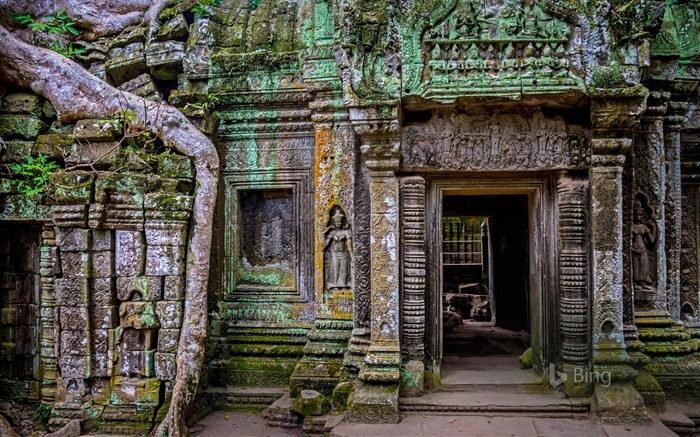 Cambodia Ta Prohm temple at Angkor 2017 Bing Wallpaper Views:1275
