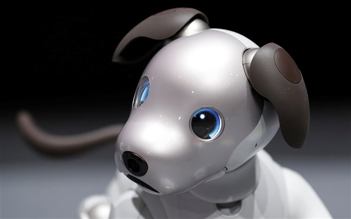 Sony aibo robot dog 2017 High Quality Wallpaper Views:231