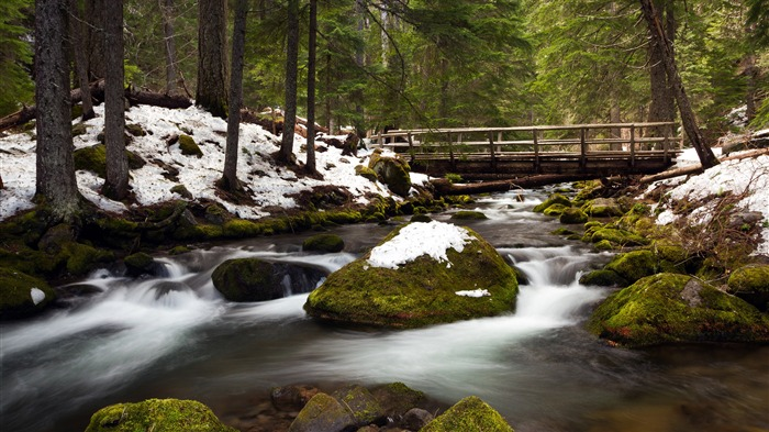 Spring forest snow river wooden bridge 4K Ultra HD Views:1105