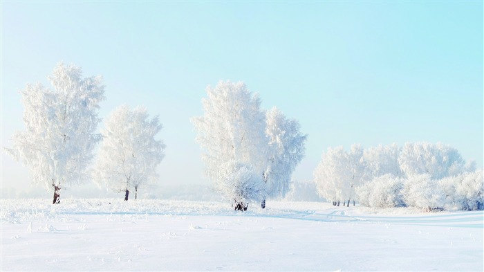 Winter jungle trees snow HD Scenery Photography Views:347