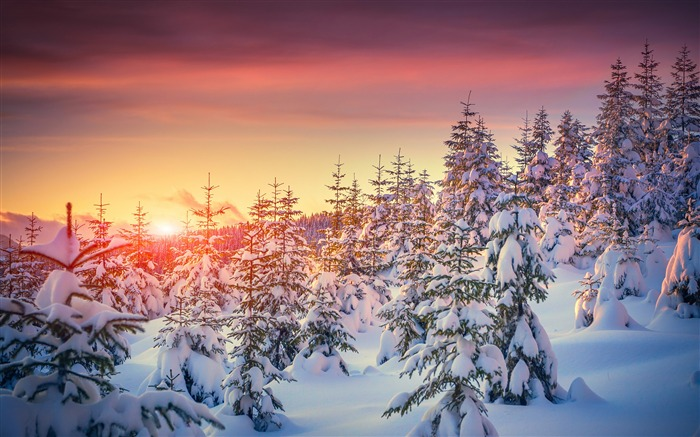 winter jungle pines snow sunset Views:5231 Date:12/27/2017 11:02:07 PM