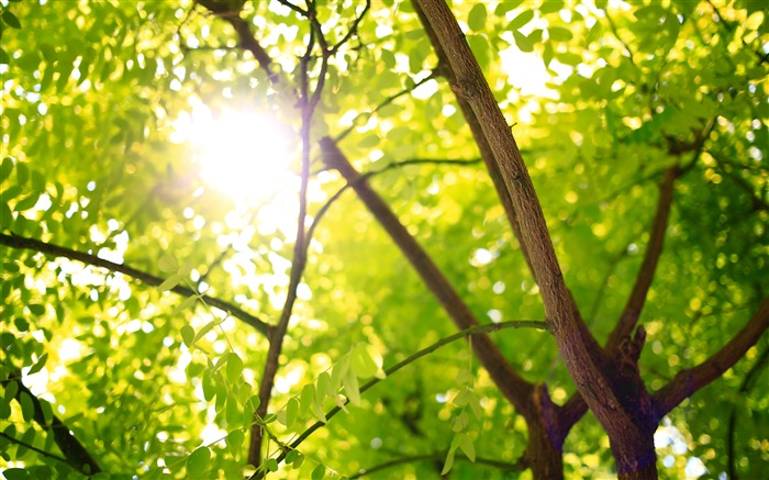 Forest tree green leaves sunlight 4K Views:199