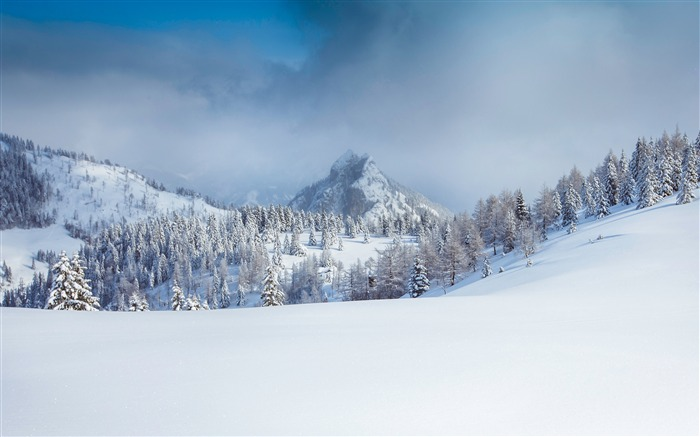 Forest winter alps snow mountain fog Views:1256