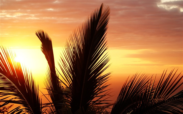 Tropical palm leaves sunset silhouette Views:960