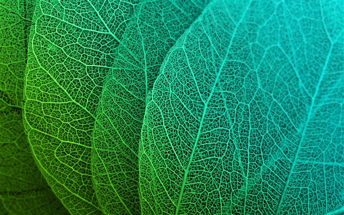 Abstract design green leaves closeup Views:168