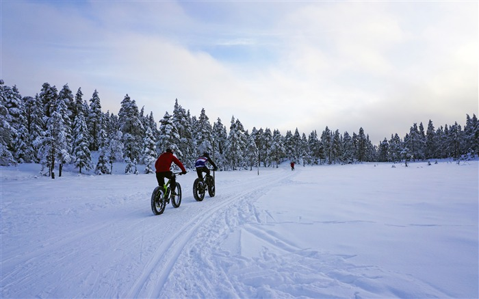 Winter forest snow biking exercise Views:60