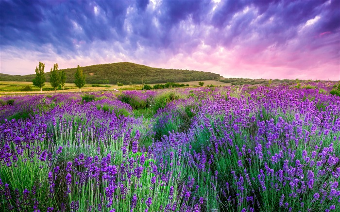 France provence lavender mountain sky Views:1225