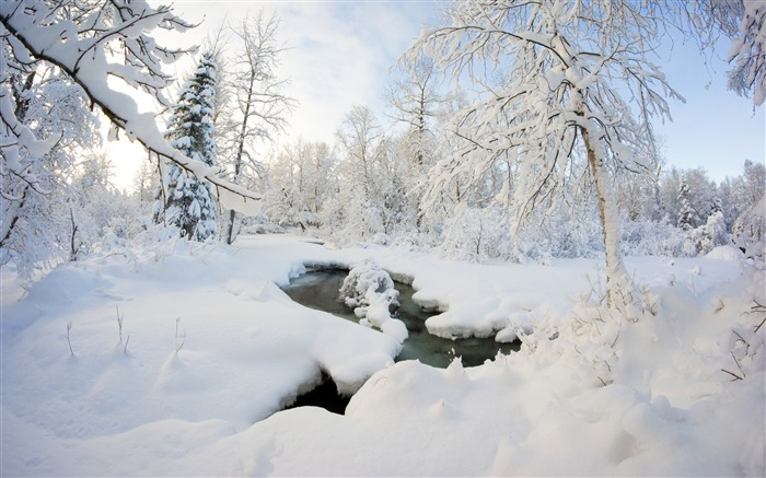 Winter Alaska snow forest river Views:1201