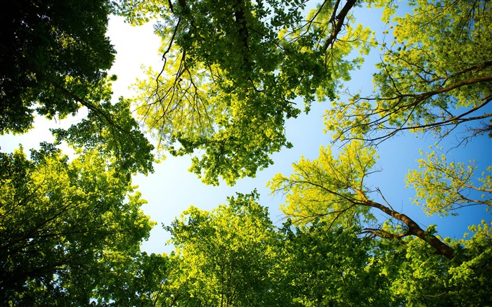 Spring green forest sunshine nature Views:3114