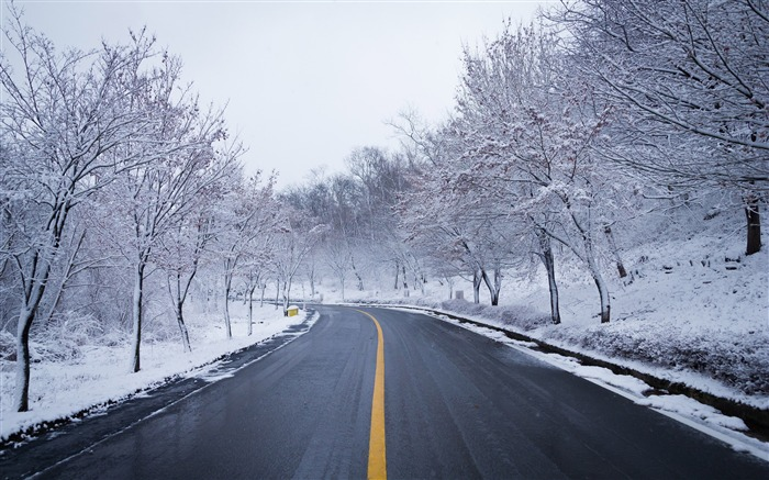 Winter jungle snow road nature scenery Views:522