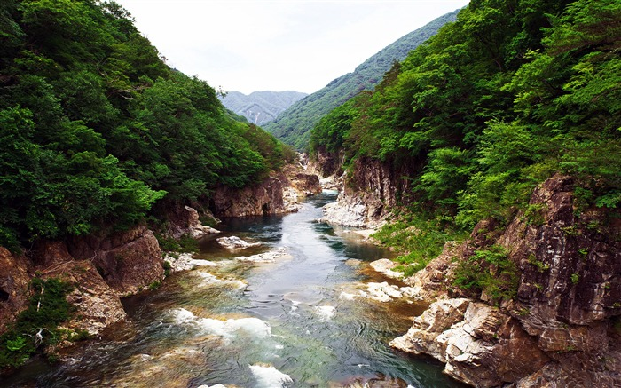 Japan Nikko National Park Forest Rivers Views:953