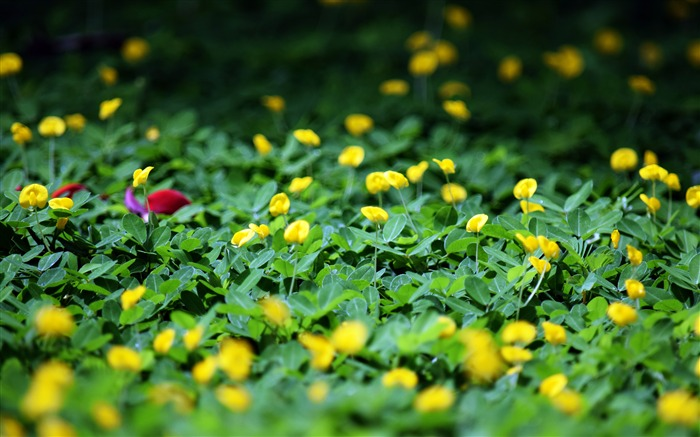 Nature green meadow yellow wildflowers bloom Views:960