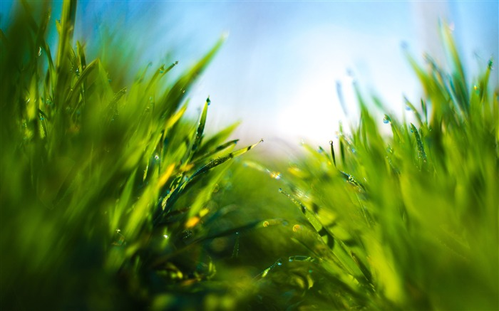 Summer rain green grass blue sky closeup Views:35