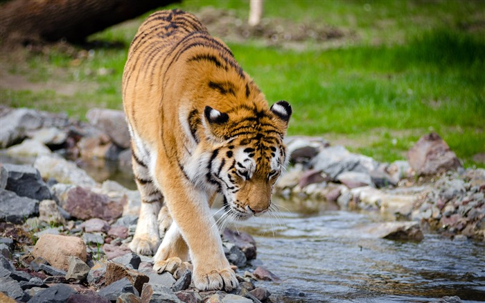August 2018 Wild Animals World HD Photo Views:10949
