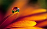 Title:Water Drop on Flowers Views:10461