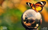 Title:Butterfly World Wallpapers Views:4957