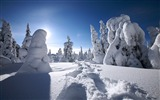 Title:Finnish Lapland snow-covered wallpaper Views:28400