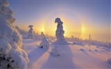 Title:Germanys Ore Mountains halo around a snow-covered trees wallpaper Views:11248