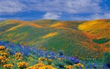 Title:Spring wildflowers bloom all over the Antelope Valley California Wallpaper Views:23665