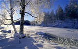 Title:Sweden snow tree wallpaper Views:33068