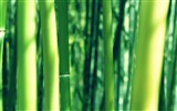 Title:bamboo wallpaper Views:14915