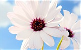 Title:Beautiful Pairs flowers wallpaper Views:12081