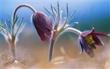 Title:pairs of flowers wallpaper Views:5724
