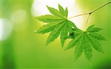 Title:pairs of green leaf wallpaper Views:10825