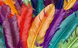 Title:Colorful Feathers Dyed Feathers Views:9503