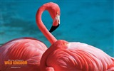 Title:Flamingo wallpaper Views:8528