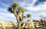 Title:Photo A Huge Cactus in Desert Views:7651