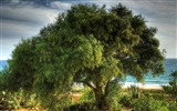 Title:Photo A Lush Tree on Seaside Views:6245