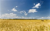 Title:Photo Autumn Wheat Field Under Blue Sky 01 Views:15995