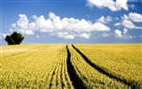 Title:Photo Autumn Wheat Field Under Blue Sky Views:10130