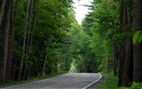 Title:Photo Country Road Lined with trees Views:9340