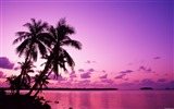 Title:Tahiti Dream romantic tropical paradise wallpaper Views:38973