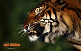 Title:Wild Animal Kingdom Wallpaper Views:10186