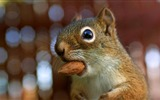 Title:comical chipmunk eating almond - chipmunk pictures Views:4473