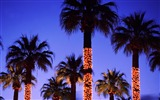 Title:put up Christmas lights palm tree wallpaper Views:43184