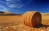 Title:Autumn hay-the worlds natural landscape photography Views:11216