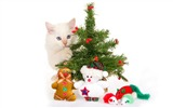 Title:Cat Christmas gift wallpapers Views:9936