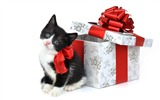 Title:Christmas gifts kitty wallpaper Views:9528