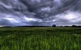 Title:Green field under stormy sky Germany Views:14383
