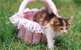 Title:Meow cat-a basket of kittens Views:6631