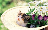 Title:Meow cat-kitten with flowers Views:16900