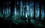 Title:Mysterious forest wallpaper Views:166852
