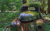 Title:Old truck in forest old truck in woods Views:6679