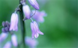 Title:Soft Focus Photography - Romantic Flowers dim 07 Views:5367