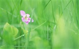 Title:Soft Focus Photography - Romantic Flowers dim 08 Views:5674
